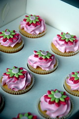 Pink and LIme Daisy Cupcake (TheLittleCupcakery) Tags: pink little cupcake daisy lime tlc cupcakery xirj klairescupcakes