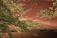 Mt. Fuji and Kawaguchi-ko (aeschylus18917) Tags: infrared japan yamanashi kawaguchilake nature fuji mtfuji fujiyama surreal kawaguchiko nikon d70 danielruyle aeschylus18917 danruyle druyle 赤外線 ir landscape scenery nikond70 sky tree ダニエルルール ダニエル ルール mountfuji 富士山 fujisan yamanashiprefecture 山梨県 yamanashiken lake mountain 1870mmf3545gifdx lakekawaguchi 河口湖 nikkor1870f3545g nikkor1870f3545gdx 1870mm 1870f3545g pxt