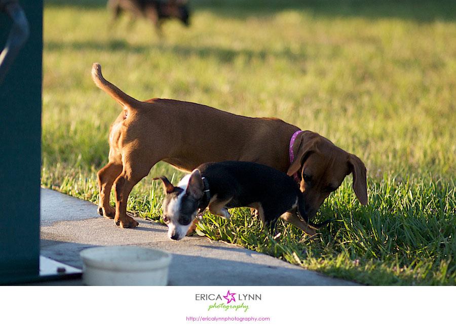 Palm Bay Dog Park