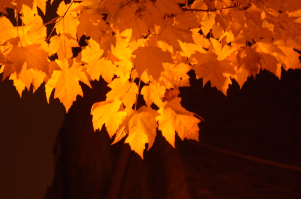 autumn_darkness_leaves