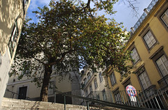 (Andre  Lima) Tags: old city urban tree portugal stairs lisboa lisbon arvore passage escadas lowperspective andrelima a andrlima ilustrarportugal aclima