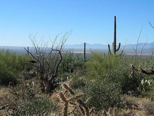desert museum-6