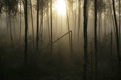 Jomala's wood and morning mist  Rob Watkins 2008 (Aland Rob) Tags: morning trees light shadow sun mist nature beauty leaves lines silhouette fog forest sunrise finland dark early soft mood pattern floating calm land rays burst archipelago aland copse land runrays aaland finstrom jomala land