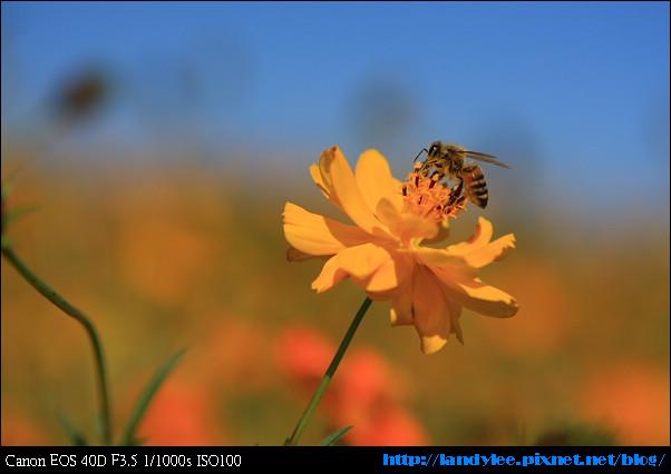 9711-新社花海:Date with Bee_085.jpg