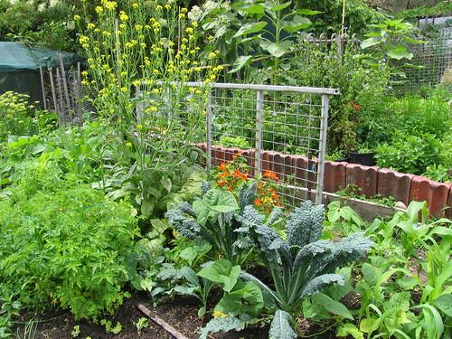 glover st garden