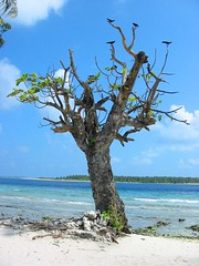Bush in Maldives (thayyib (na.tha.sha)) Tags: world travel holiday tree love beach nature beautiful swim big bush perfect flickr paradise photographer heart near side like lagoon location fave shore change win reef maldives the dhivehi classique maldivian nathasha raajje thayyib thoyyib thobbu
