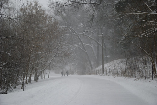 Snowstorm in High Park, Dec. 19th, 2008