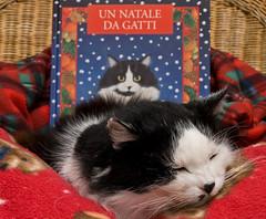 Un natale da gatti (Topyti) Tags: xmas pet cat noel minet natale gatto gatti chrismas gattianatale chrismascat gattinatale