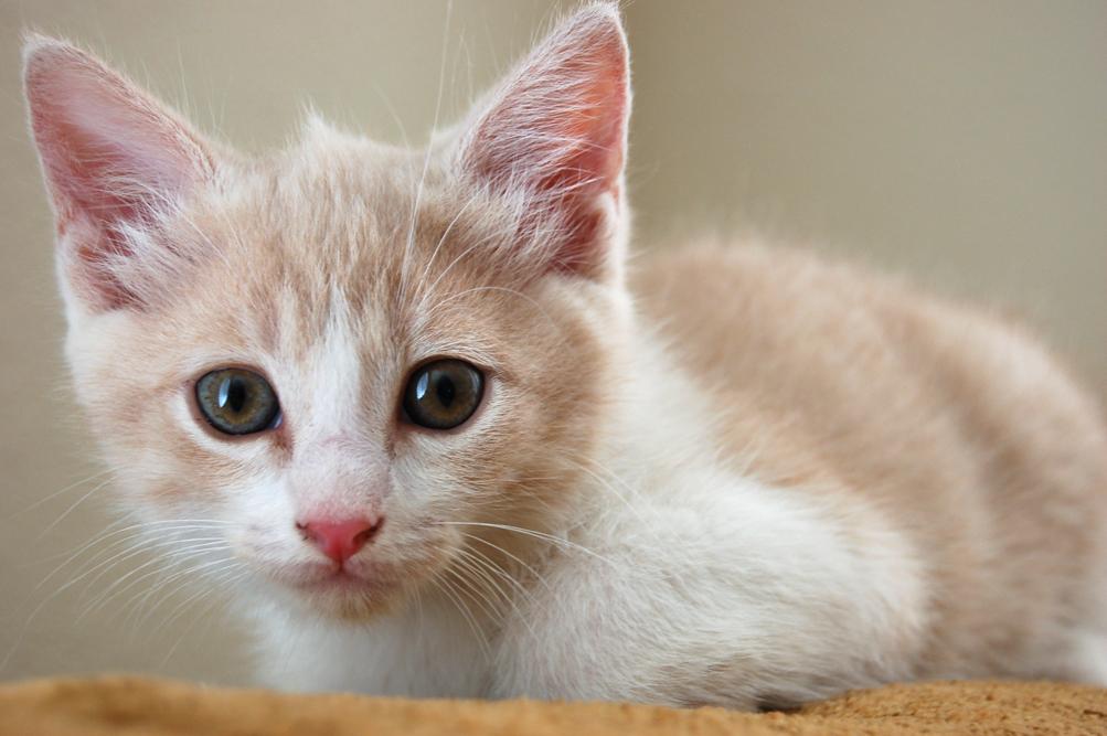 KittySister