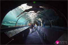 Australia (sergrace) Tags: australia sydneyaquarium