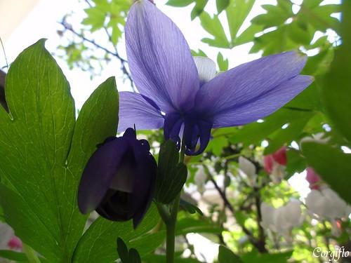 blog110523-jardin-03