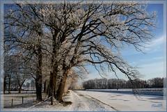 9jan09 Wateregge Loolee. (guus timpers) Tags: trees winter ice frozen bomen bevroren sneeuw ijs almelo rijp loolee wateregge lolee