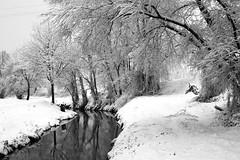 Neve (Armando Banfetti (Matteo Mangiarotti)) Tags: trees winter wild snow cold tree alberi wow river countryside italia fiume country brina campagna neve 5d albero inverno canoneos lombardia freddo brrrr bosco riflesso pavia rotta intothewild canoneos5d travacsiccomario
