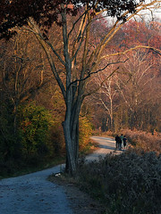 Frick Park (by: EasyPickle/Greg, creative commons license)