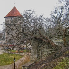 I can't keep my eyes off of you (jc ynion) Tags: old wall town europe tallinn estonia guard medieval oldtown middleages unescoworldheritage schengen guardtower