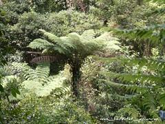 Nature Walk22