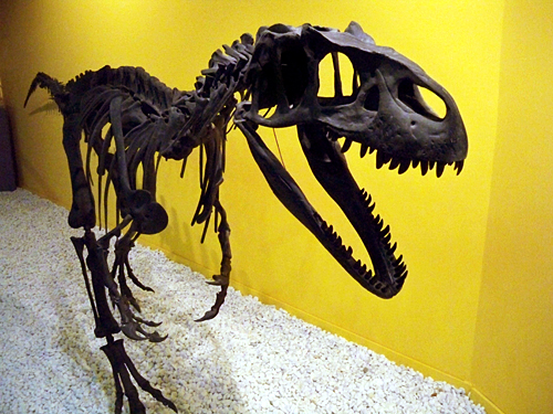 Paleontological-Museum-Vale