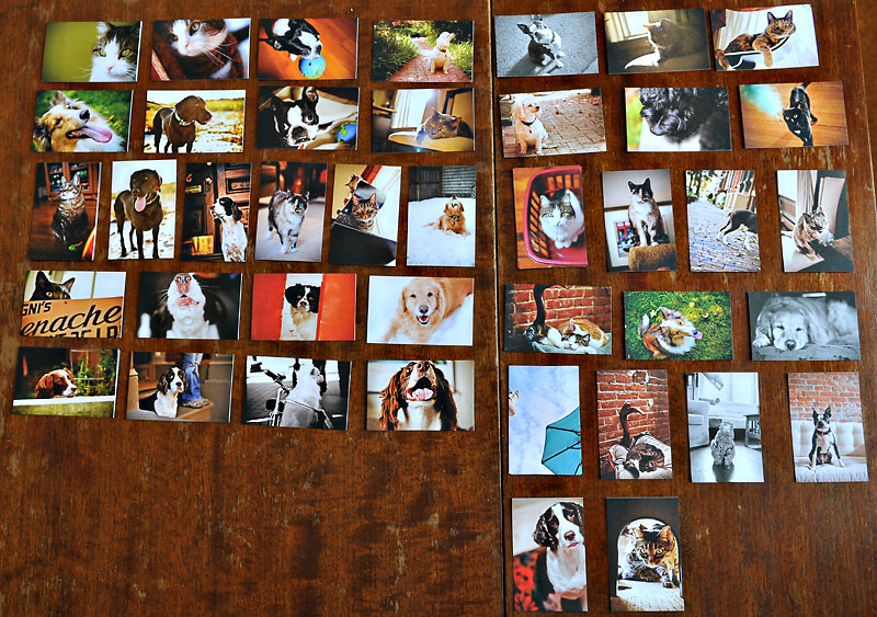 Fat Orange Cat moo cards