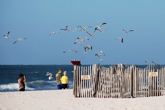An afternoon walk... (LA Lassie) Tags: friends beach nature topv111 outdoors sand october gulf gulls alabama explore coastal inspire gulfshores gulfcoast naturesfinest interestingness225 views100 i500 beachfencing eastatthet postedkeepout explore20february2009 8favs151views