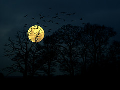 ~ after dark ~ (~ Pixel Passion ~) Tags: blue moon black nature birds silhouette yellow fauna night germany dark landscape deutschland mond flora darkness nacht sony natur creepy gelb blau vgel landschaft shining 2009 schwarz mystic dunkel mystisch dunkelheit gruselig leuchten scheinen sonydscp100 atomicaward waitingforet