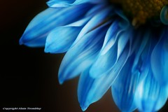 Lovely Blue (beluga 7) Tags: blue bravo bleu abigfave flickrdiamond naturewatcher magicdonkeysbest obq lesamisdupetitprince thenewselectbest