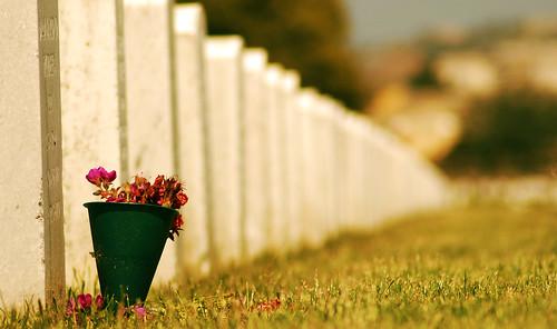 Cemetery-flower1
