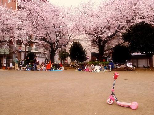 公園の花見