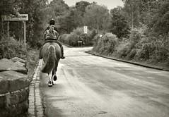 (andrewlee1967) Tags: road uk trees england horse girl britain gb ashtonunderlyne rider ef50mmf14usm andrewlee 50d tameside andrewlee1967 canon50d