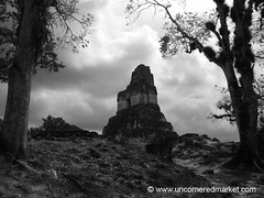 Tikal Ruins in Black and White