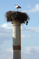 Storkic Column (MykReeve) Tags: sky cloud clouds nest roman morocco column stork volubilis المملكةالمغربية المغرب وليلي geo:lat=34072613 geo:lon=5554265