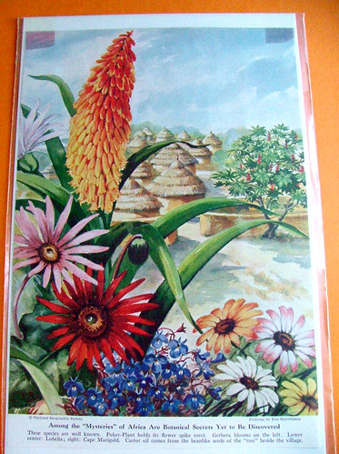 Vintage National Geographic Flower Print