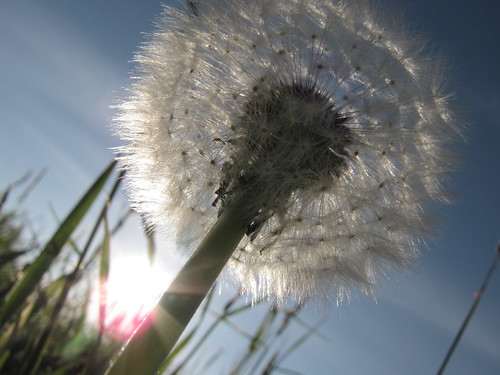 DandiLion Project