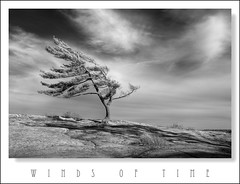 Winds of Time (Light Forger) Tags: park old light ontario canada tree art nature landscape nikon bravo solitude alone peace wind time photos fine peaceful tranquility weathered sensational d200 wilderness eternity desolate ages soe hdr baron eternal gpc wuthering forger photomatix killbear supershot sarene imagepoetry justimagine specland windsoftime abigfave platinumphoto aplusphoto theunforgettablepictures platinumheartaward astoundingimage tup2 thesuperbmasterpiece quarzoespecial specialpictures magicdonkeysbest reflectyourworld artofimages bestcapturesaoi travelsofhomerodyssey oracoob flickrunitedaward magicunicornverybest lightforger
