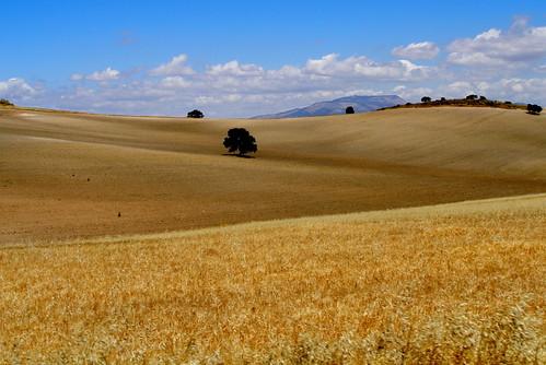 En los campos de mi Andalucía
