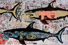 sharktoof (Luna Park) Tags: nyc streetart ny newyork brooklyn wheatpaste tags williamsburg sharks lunapark sharktoof
