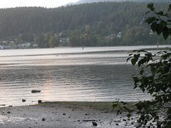 Geese in a row (O Aguiar) Tags: sunset water rockypoint portmoody