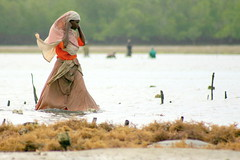 grace on water (Farl) Tags: africa sea seaweed work tanzania island coast women employment farm muslim farming zanzibar lowtide cultivat
