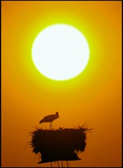 the warmth of the nest and the sun (maios) Tags: travel sun bird greek photo europa flickr photographer nest hellas warmth greece macedonia thessaloniki fotografia stork salonica manikis maios iosif  heliography   mywinners            iosifmanikis