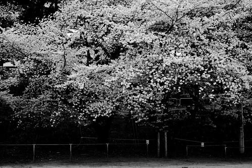 sakura monochrome 4