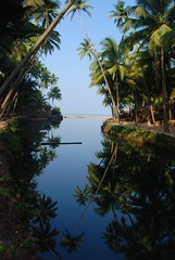 palm fringed paradise