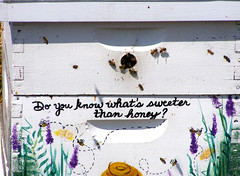 A Sweet Question (FrogBum) Tags: garden michigan bee caution honeybee beehive notrespassing shelbytwp shelbytownship riverbendspark teachinggarden doyouknowwhatssweeterthanhoney