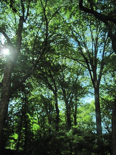 Central Park Sunshine