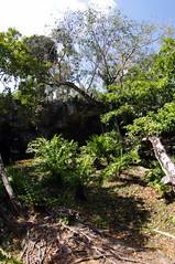 More trees (Kurayba) Tags: trees mexico pentax grand fisheye cenote gran roo 1017 quintana k7 smcpdafisheye1017mmf3545edif