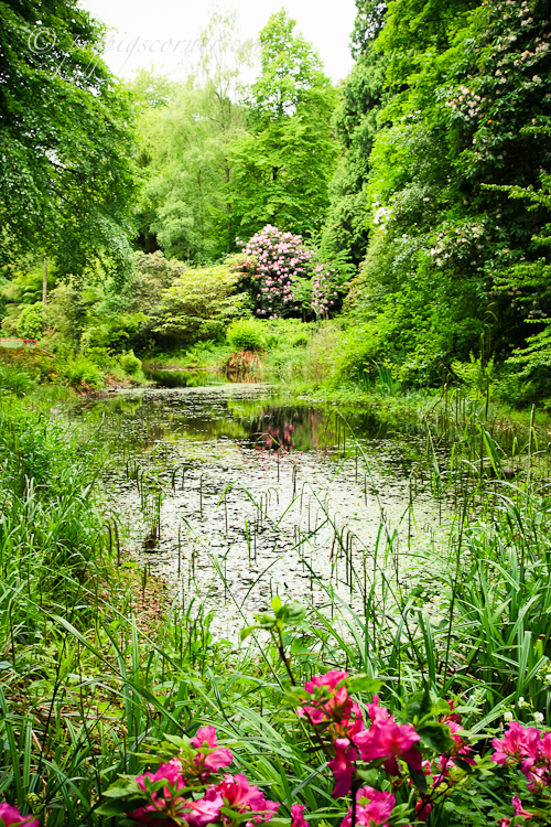 Portmeirion gardens