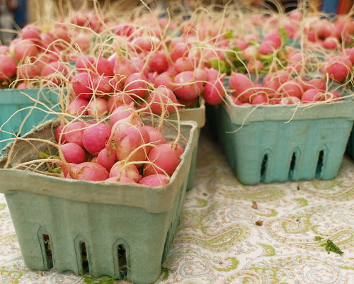 cute pink radishes