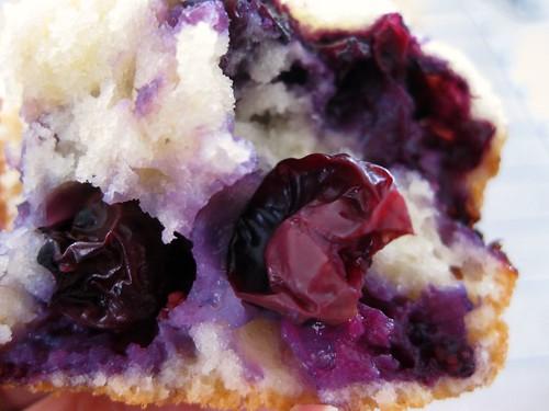 muffinblueberry (2)