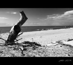 Spiaggia in b/n - Beach in bw (m. scintilla) Tags: sea beach mare spiaggia paololivornosfriends cieloskynuvoleclouds troncolegnoramiwoodrow bnbianconerobwbw