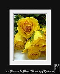 The Anniversary of my mother dying 13 years ago. REST IN PEACE MOM- I MISS YOU! (Frozen in Time photos by Marianne AWAY OFF/ON) Tags: roses yellow yellowflowers flickrtoys yellowroses blueribbonwinner framedphotos nationalgeographicwannabes mywinnerstrophy createdbyusingflickrtoys imagescreatedwiththeuseoffdsflickrtoys blueribbonphotography overtheexcellence flowersarefabulous matte5191493 nationalgeographiswannabes