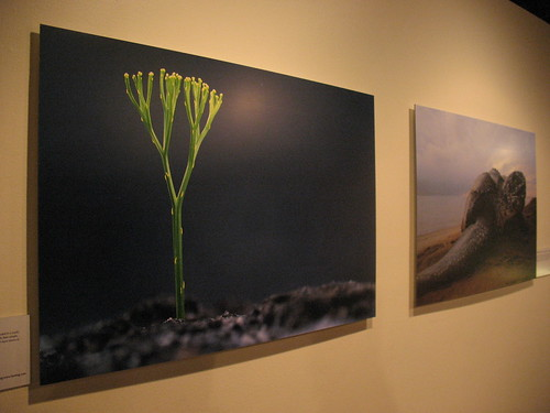 Land Plants, 470 million years ago and Turtles, 230 million years ago
