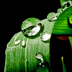 3342668477 3124caf887 m biocarburant à base dherbe
